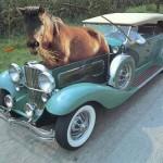 1-horsepower